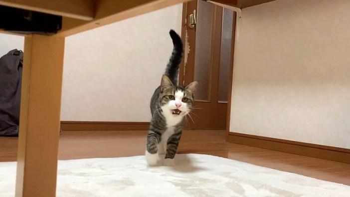 ワンワン鳴く猫