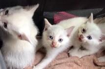 保護された子猫達