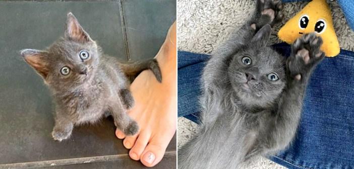 幸せになった子猫