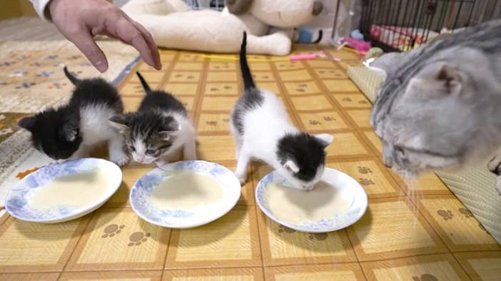 猫と子猫達