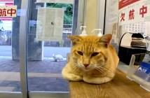フェリー乗り場の猫
