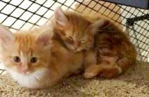 役所の保護猫施設