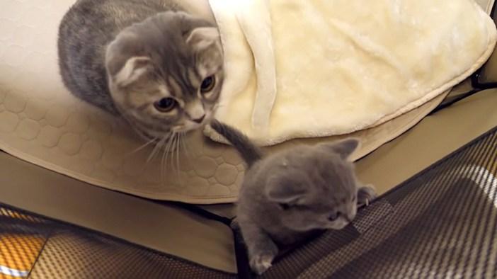 見守る母猫