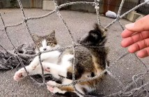 網にシッポが絡まった子猫
