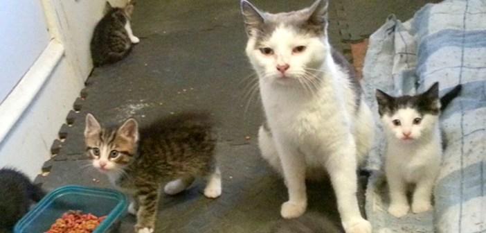子猫を連れて来た猫
