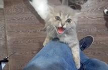 足を登ってくる子猫