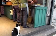 ケバブが食べたい猫