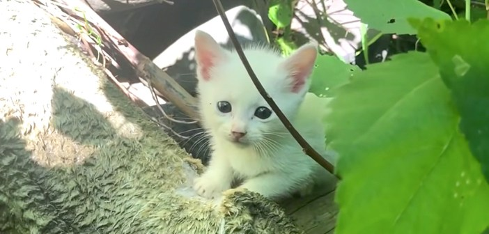 草むらの子猫