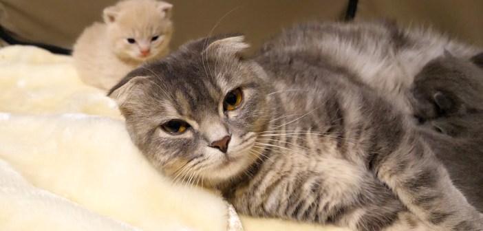 幸せな猫の親子