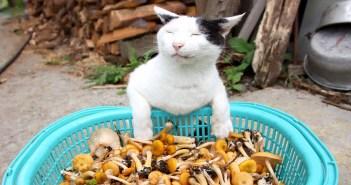 ナラタケと猫