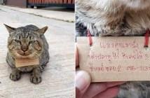 帰ってきた猫