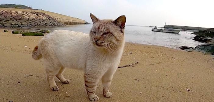 海辺で出会った猫