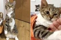 3本足の猫