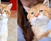 世話をしてくれた男性が亡くなった後、行方が分からなくなった3本足の猫。数年後に再び姿を現し、温かい生活を取り戻す