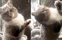 寒さの中の猫