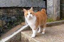 神社で出会った猫