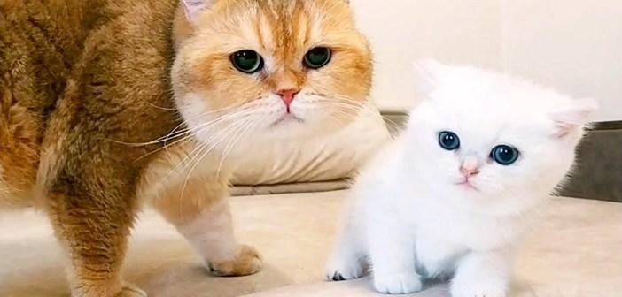 お父さんと子猫