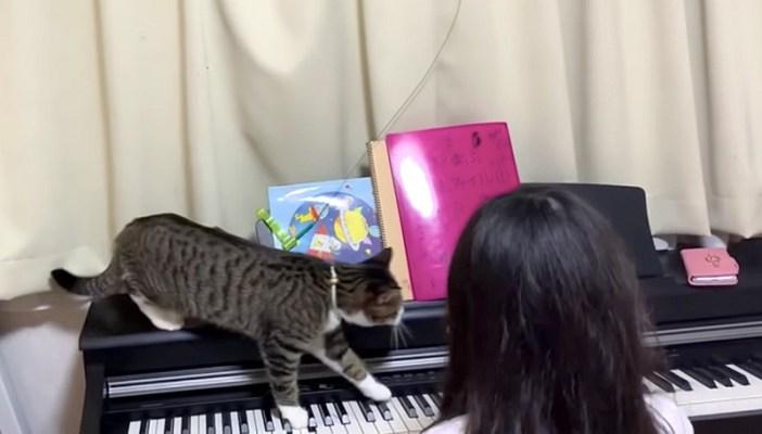 ピアノの練習の邪魔をする猫