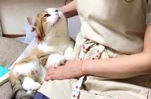 お母さんに甘える猫