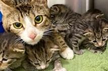 子猫達を守る母猫