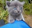 釣りの最中現れた子猫