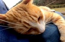 膝で甘える猫