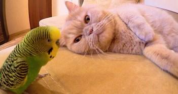 インコと猫