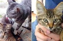 先住猫と保護子猫