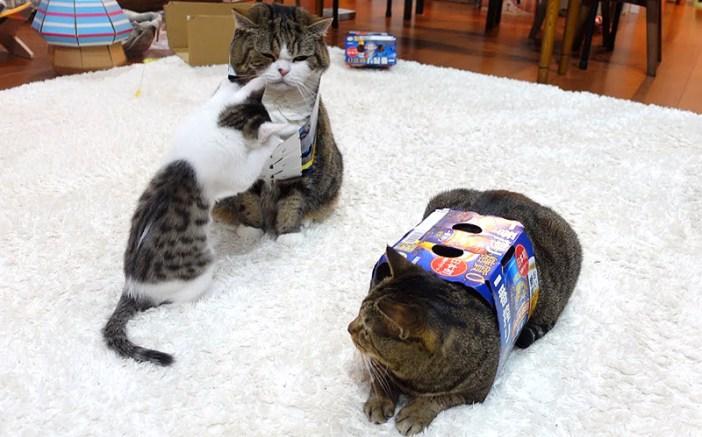 先住猫の絡む子猫