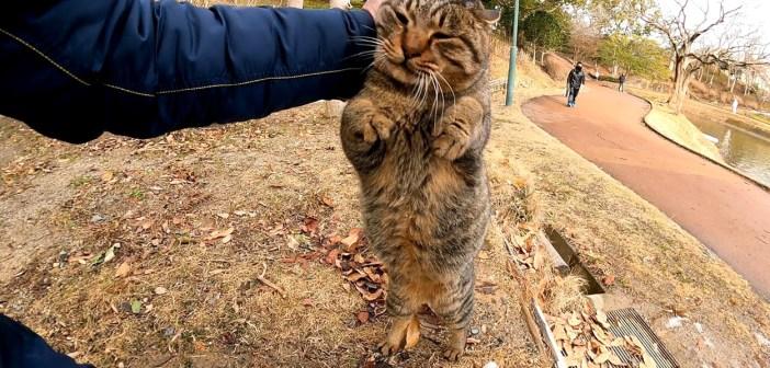 頭を擦りつける猫