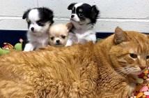 動物達に寄り添う猫