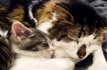 子猫とおじいちゃん猫