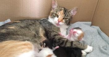 子猫を毛づくろいする母猫