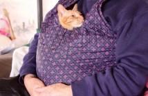 抱っこされる猫さん
