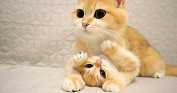 仲良しな猫の親子