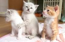 興味津々の子猫達