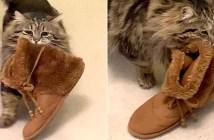 ルームシューズを持ってくる猫