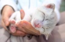 手の平で眠る子猫