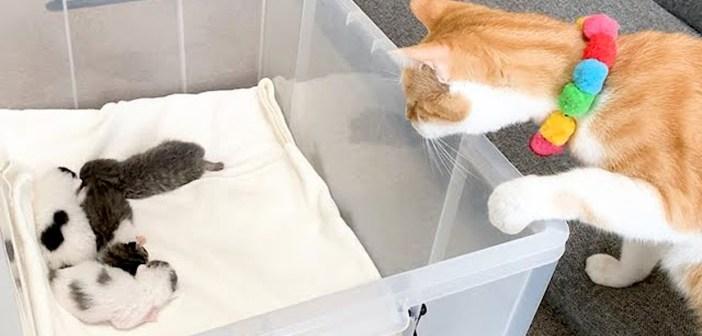 赤ちゃん猫を初めて見た先住猫