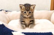 ベッドに座る子猫