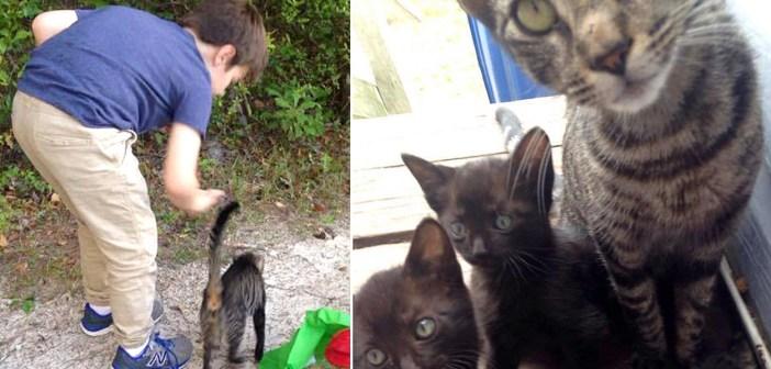 キャンプ場で出会った猫の親子