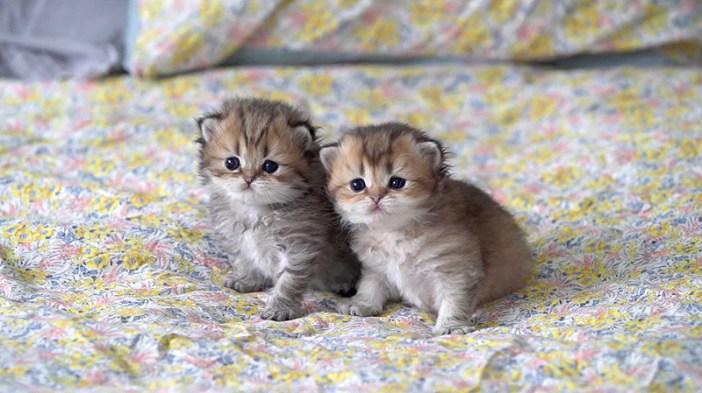 寄り添う子猫の姉妹