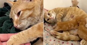 命を繋いだ猫