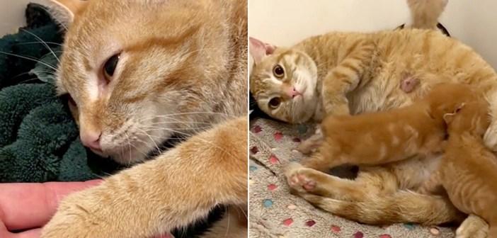 安楽死のため連れて来られた母猫。獣医さんが懸命に命を繋ぎ止めると、愛する子猫達との幸せな再会が待っていた!