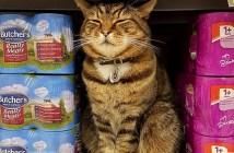 スーパーの猫