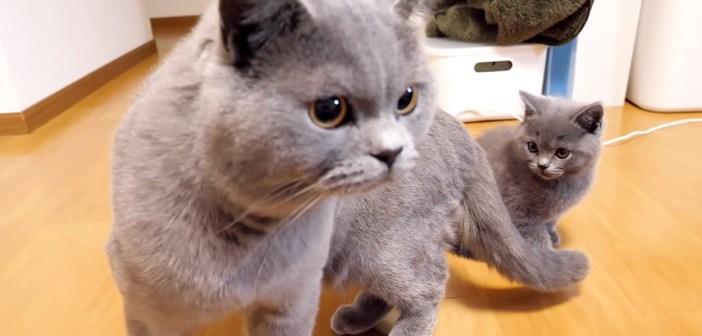お父さんと2度目の対面を果たした子猫達。警戒して全身の毛がポワポワに逆立つも、好奇心には勝てない様子が可愛い♡