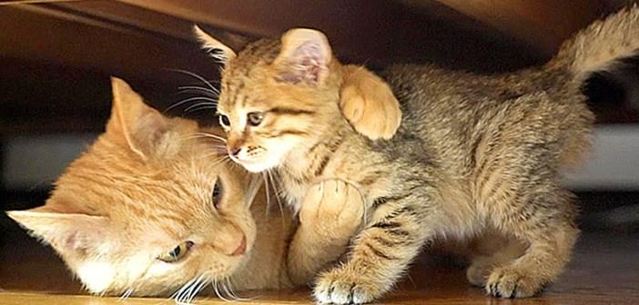 子猫を受け入れた猫