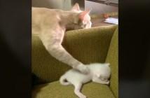 子猫を寝かしつける母猫