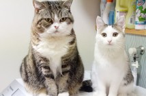 洗濯機の上で揺れる猫達