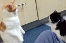 嫉妬深い猫達